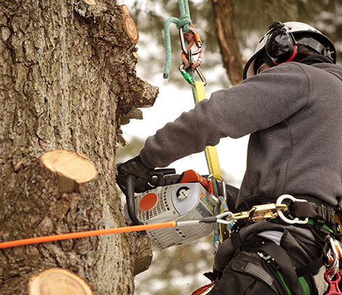 Potter's Tree Service & Landscaping employee cutting a tree down